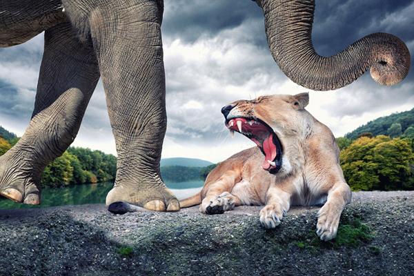 现实动物艺术照