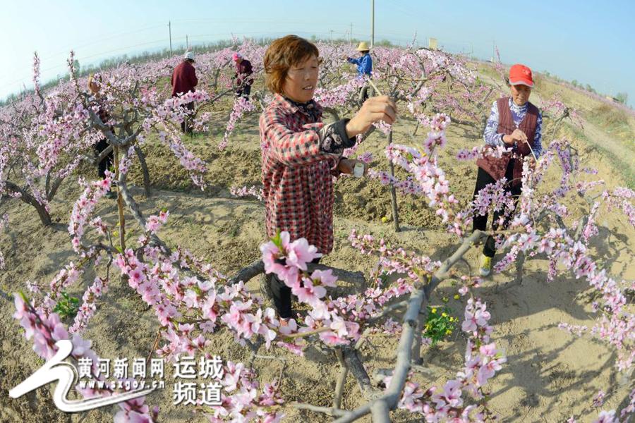 芮城:李尚师被誉为为中国当代民间修史第一人 - 古魏一笔 - 古魏一笔的博客